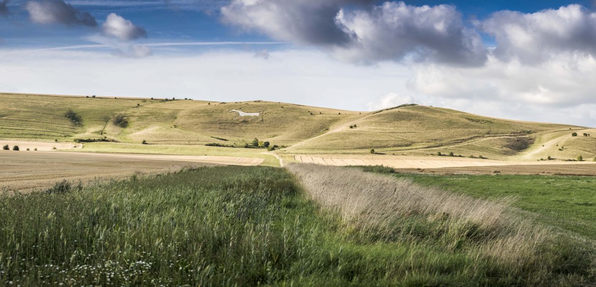 The Pewsey Downs