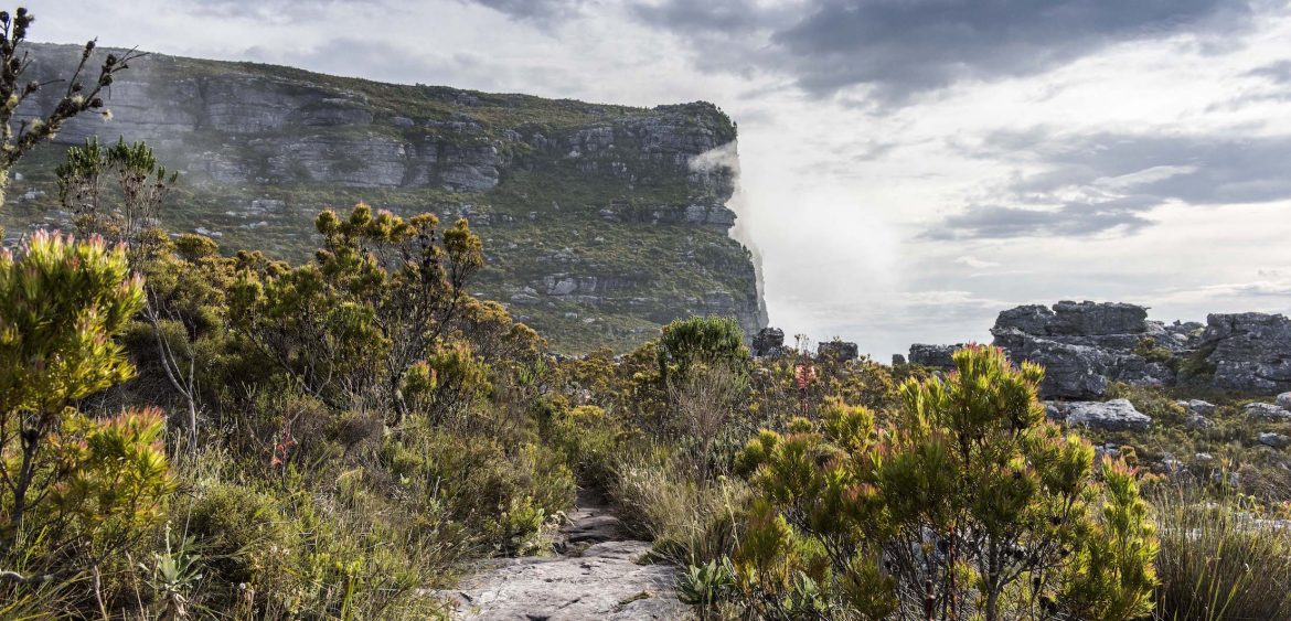 Nursery Buttress, Table Mountain