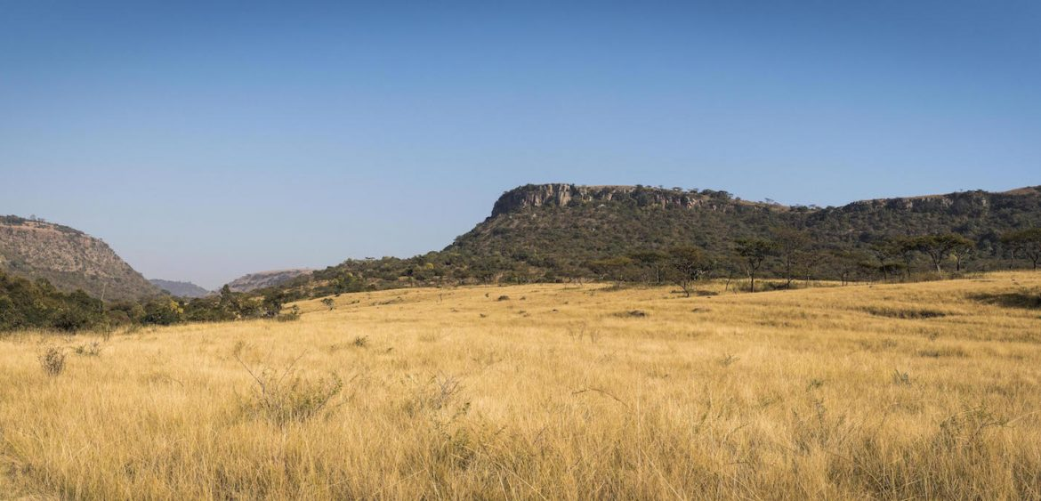 Dry grassland at Karkloof Nature Reserve